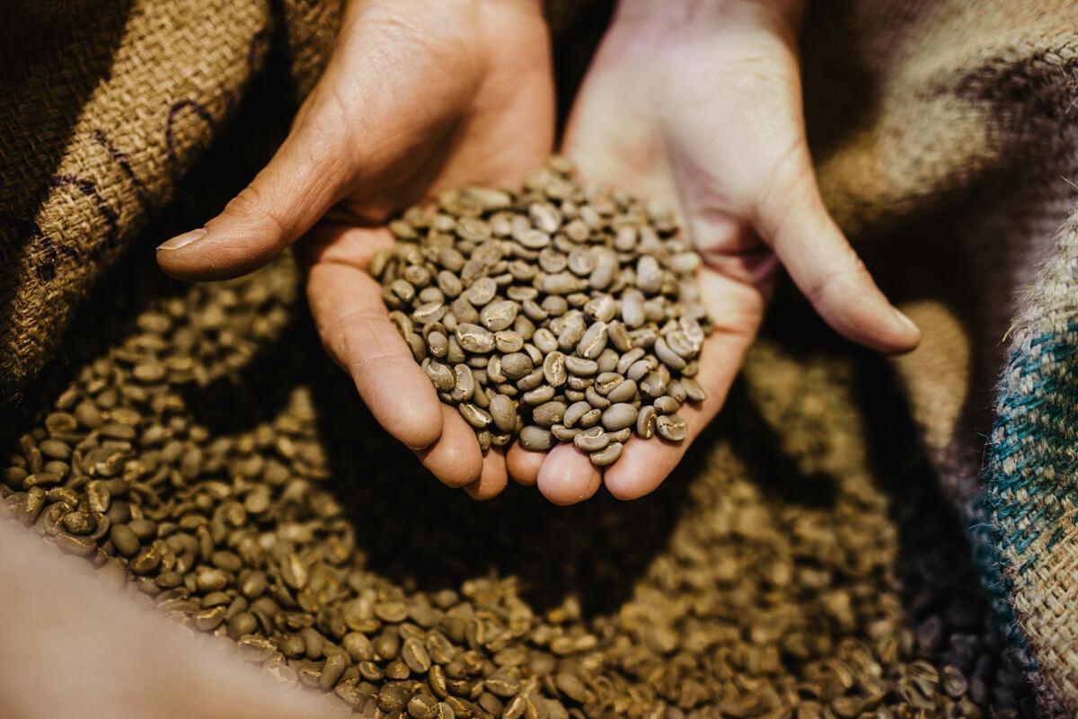 Hände schöpfen Rohbohnen aus einem Sack voll Rohkaffee.