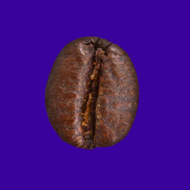 Nahaufnahme Kaffeebohne Costa Rica Tarrazu