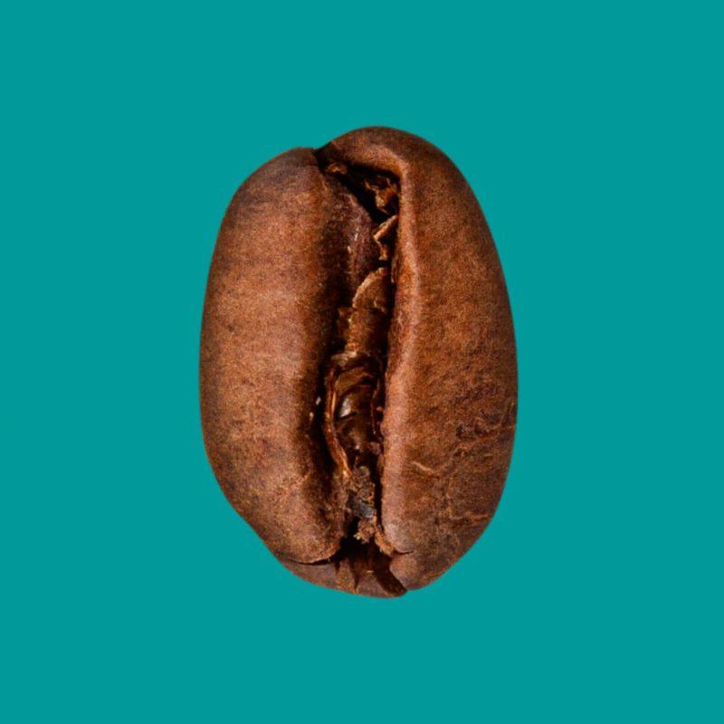 Nahaufnahme Kaffeebohne Arabica entkoffeiniert