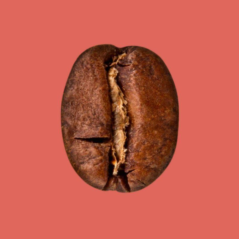 Nahaufnahme Kaffeebohne Guatemala
