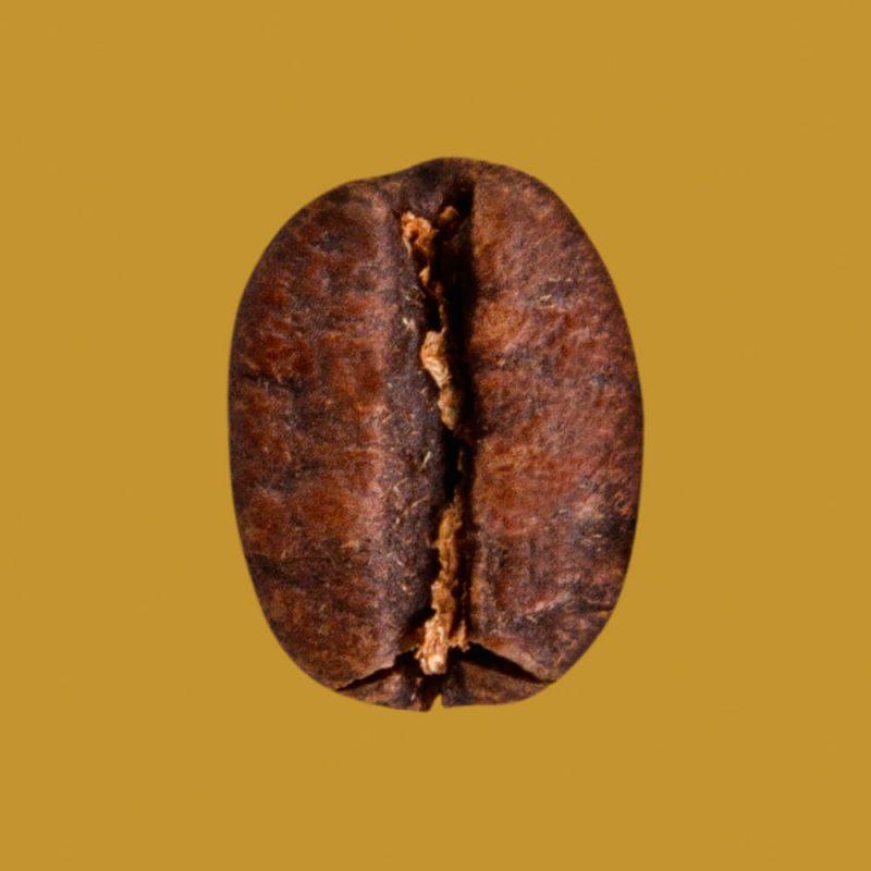 Nahaufnahme Kaffeebohne Honduras