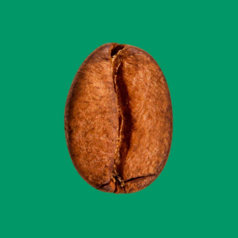 Nahaufnahme Kaffeebohne Indien Monsooned Malabar