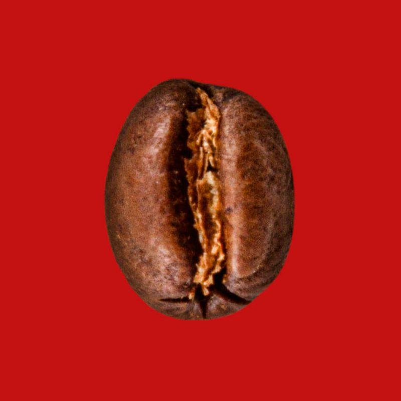 Nahaufnahme Kaffeebohne Indien Pearl Mountain