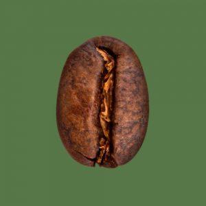 Nahaufnahme Kaffeebohne Indonesien