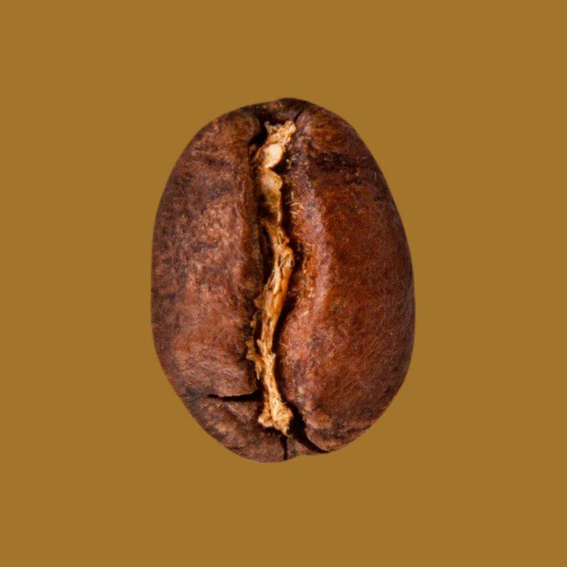 Nahaufnahme Kaffeebohne Kolumbien