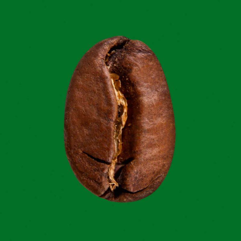 KAFFEE MANUFAKTUR - Maragogype