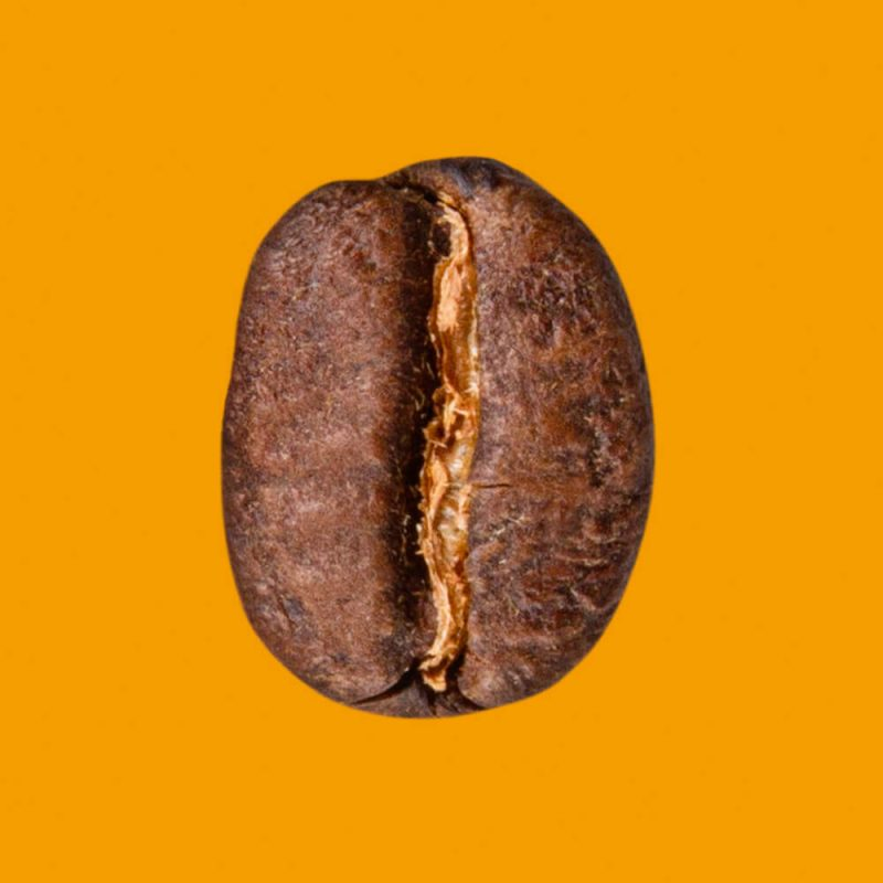 Nahaufnahme Kaffeebohne Mexiko