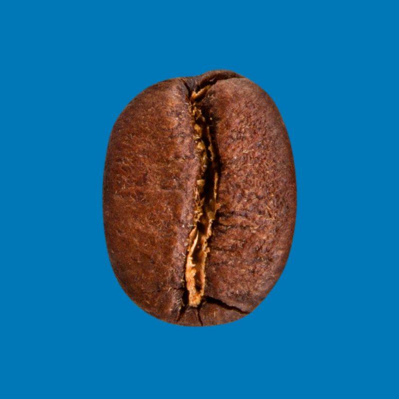 Nahaufnahme Kaffeebohne Nicaragua