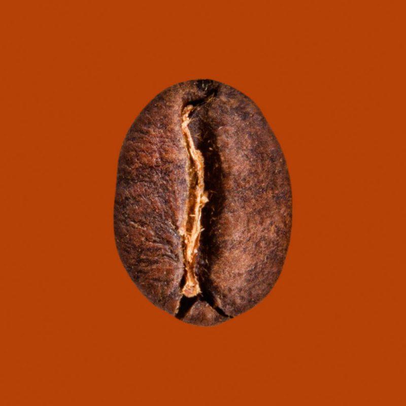 Nahaufnahme Kaffeebohne Uganda