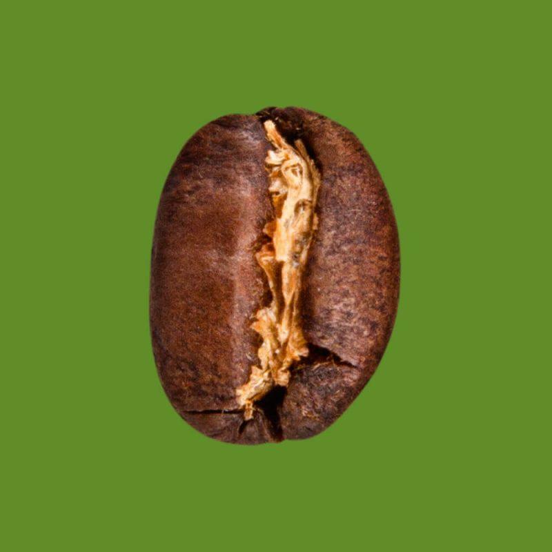 Nahaufnahme Kaffeebohne - Wildkaffee Äthiopien